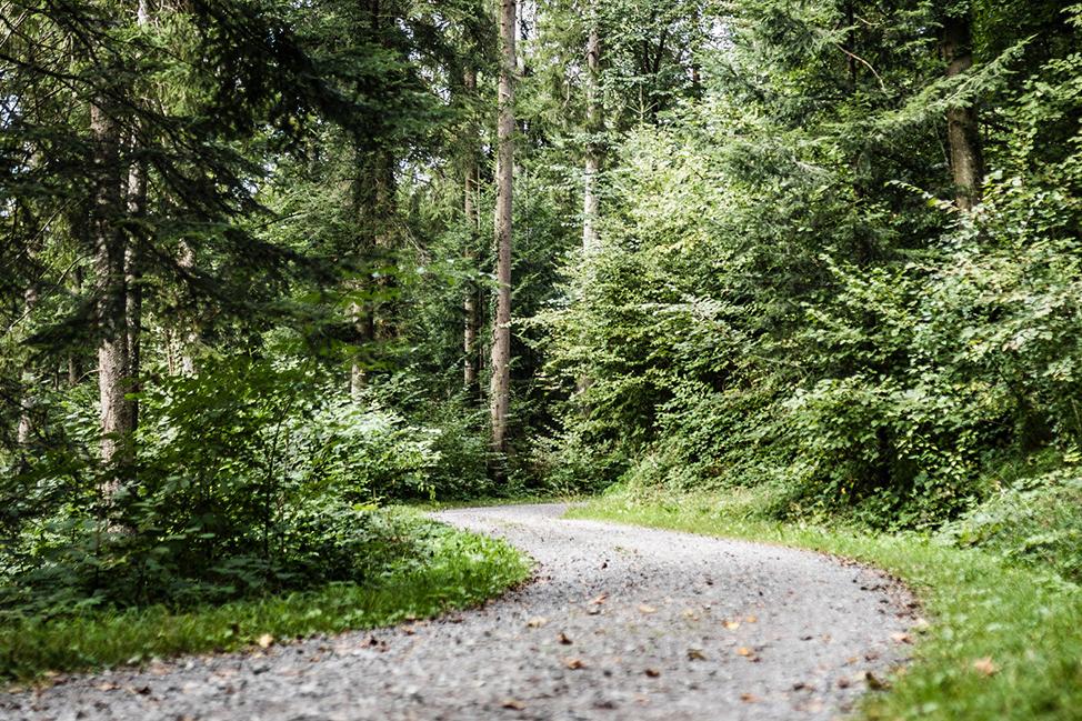 ZugSPORTS Nachhaltigkeit WaldParcours